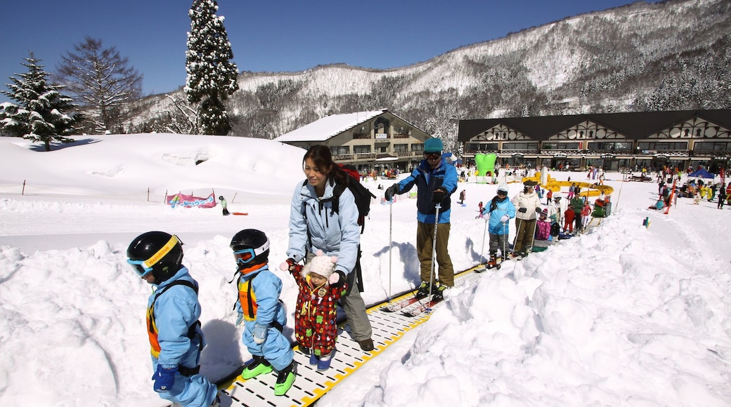 Nozawa Onsen Snow Resort showing snow and snow skiing as well as children
