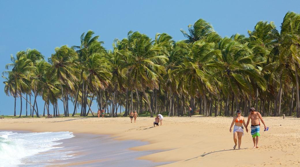 Maceió mostrando escenas tropicales y una playa y también una pareja