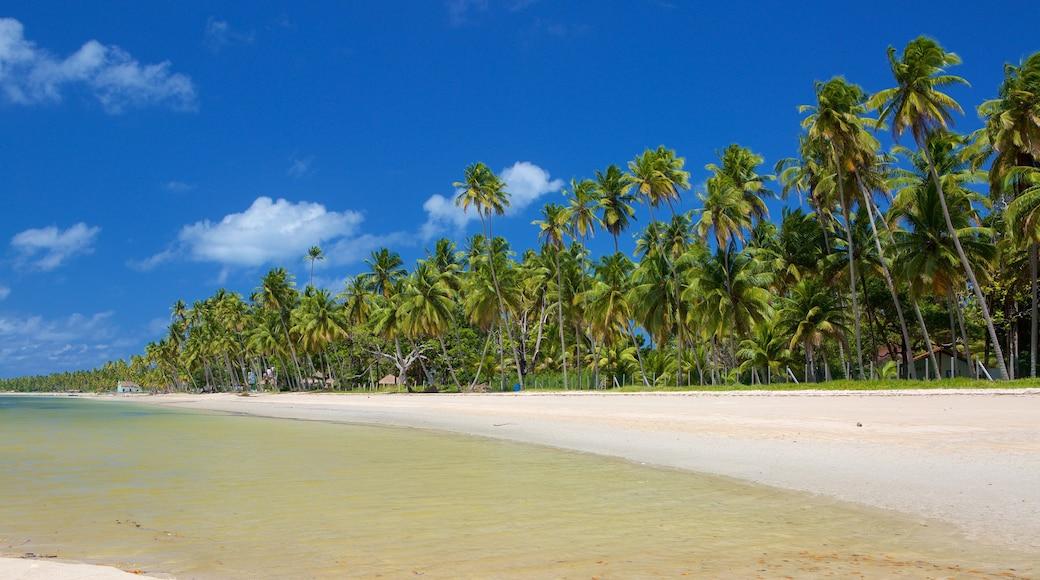 Tamandaré caracterizando cenas tropicais e uma praia de areia