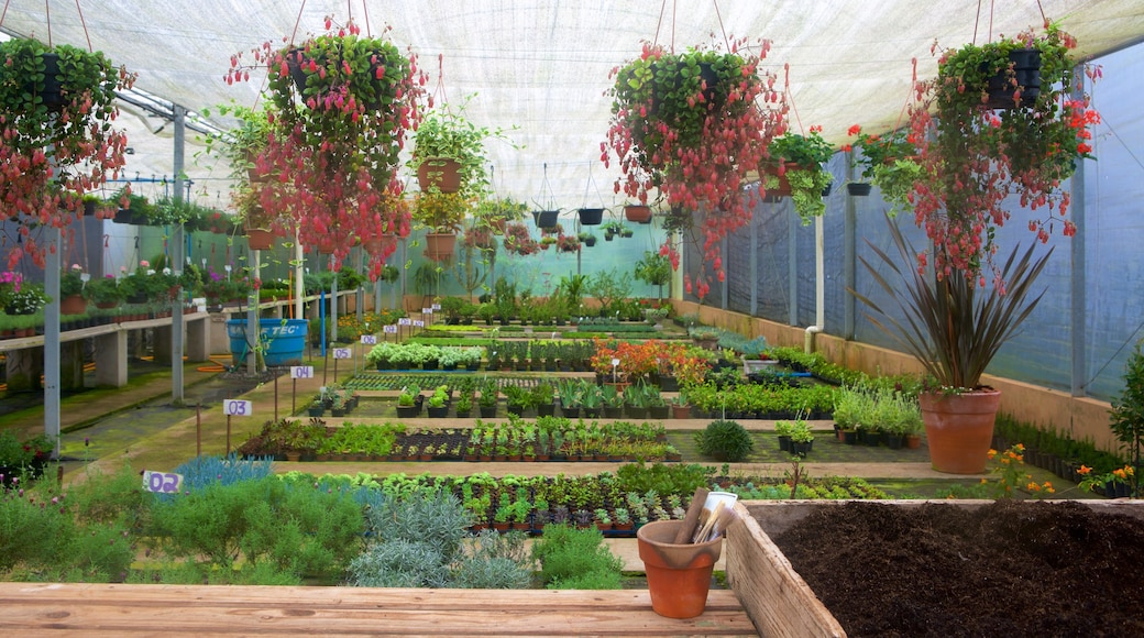 Le Jardin Lavender Park featuring flowers and interior views