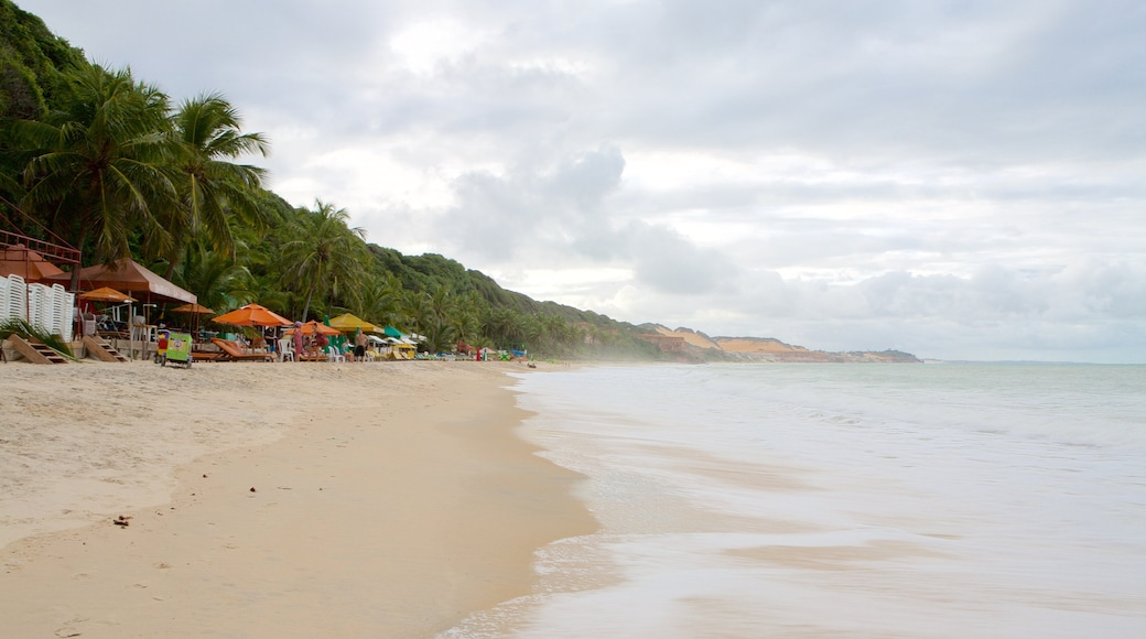 Pipa which includes a beach, tropical scenes and general coastal views