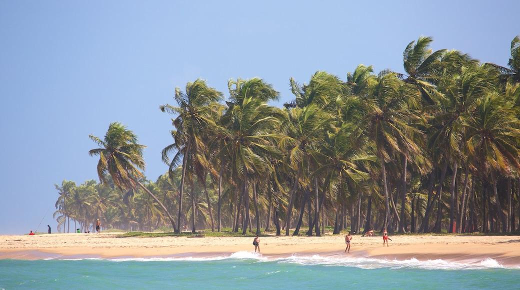 Maceió que incluye una playa de arena, escenas tropicales y vista general a la costa