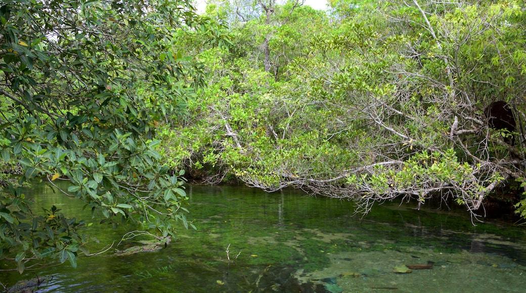 Bonito que incluye selva y un río o arroyo
