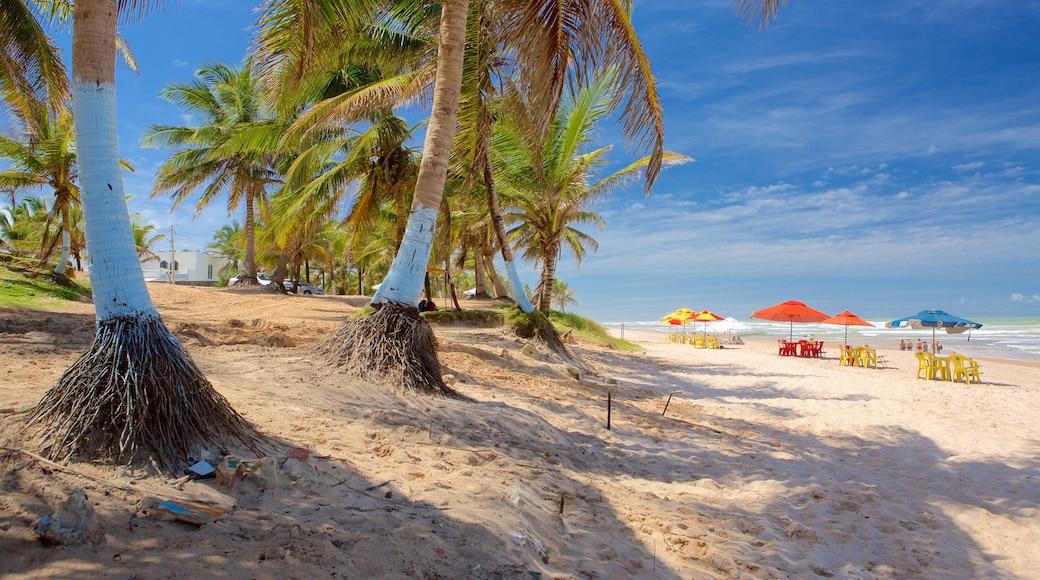 Flamengo Beach welches beinhaltet Strand, allgemeine Küstenansicht und tropische Szenerien