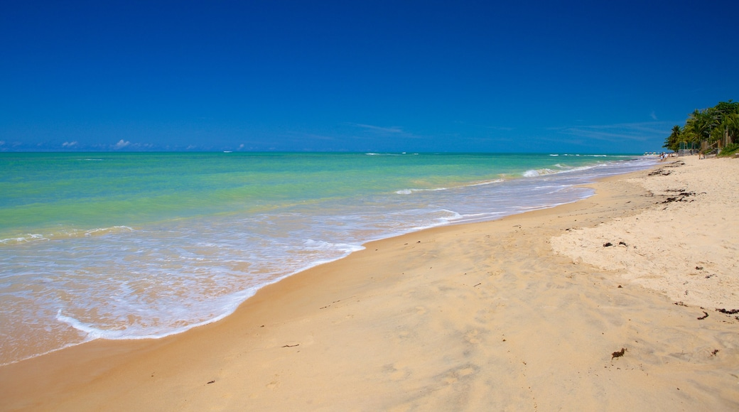 Praia de Pitinga que inclui uma praia de areia, paisagens litorâneas e surfe