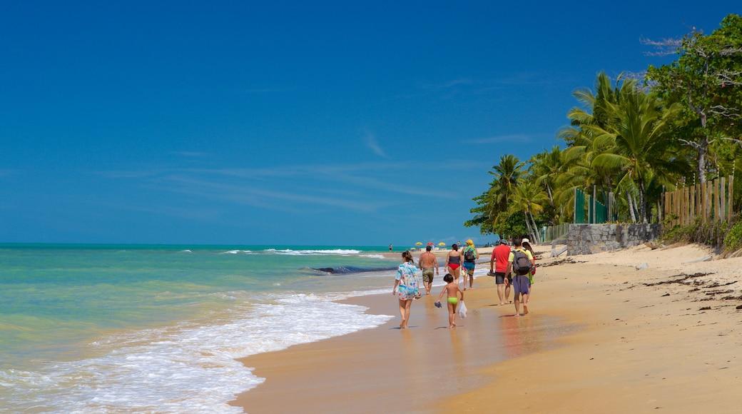 Praia de Pitinga mostrando cenas tropicais, paisagens litorâneas e uma praia de areia