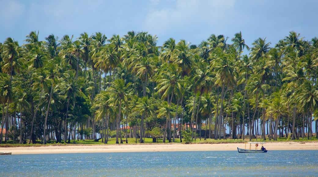 Tamandaré que inclui canoagem, paisagens litorâneas e uma praia