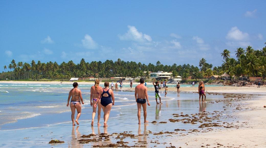 Paripueira Beach showing tropical scenes, a beach and general coastal views