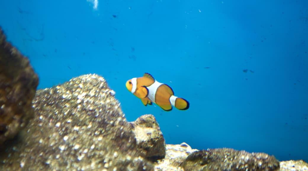 Ipojuca featuring marine life