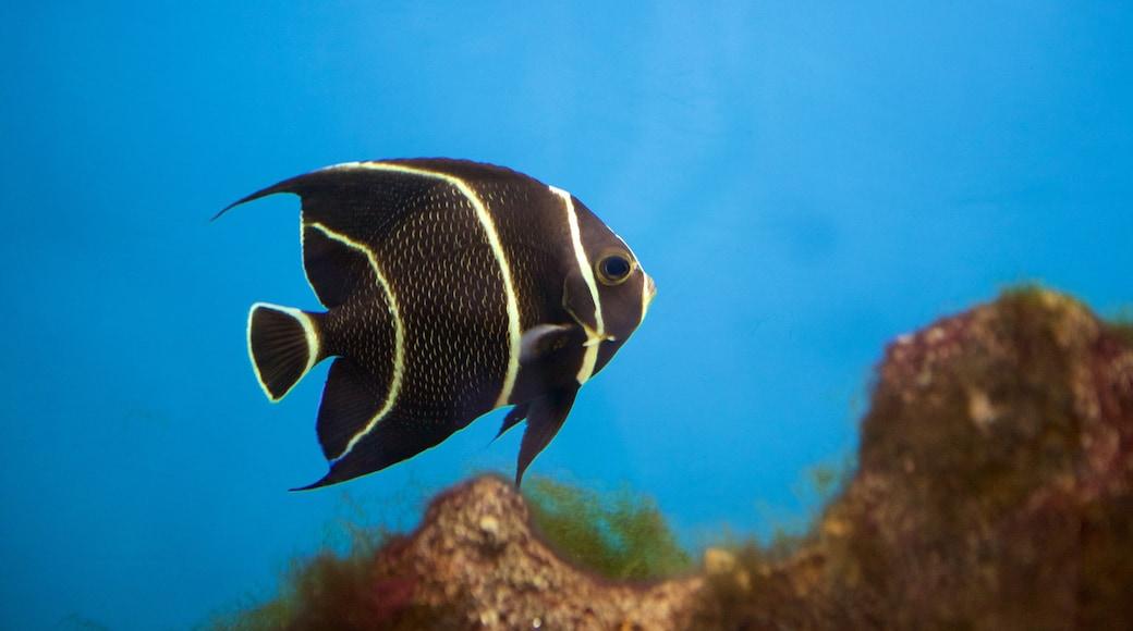 Ipojuca showing marine life