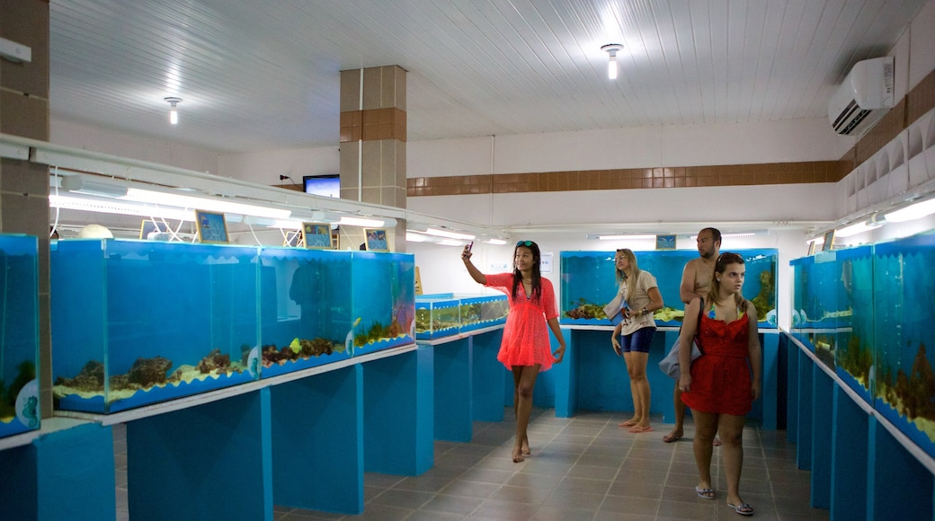 Ipojuca featuring interior views and marine life as well as a small group of people