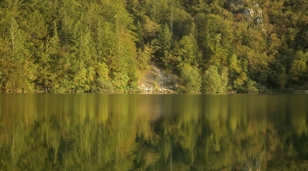 Lake Bohinj which includes a lake or waterhole and forests