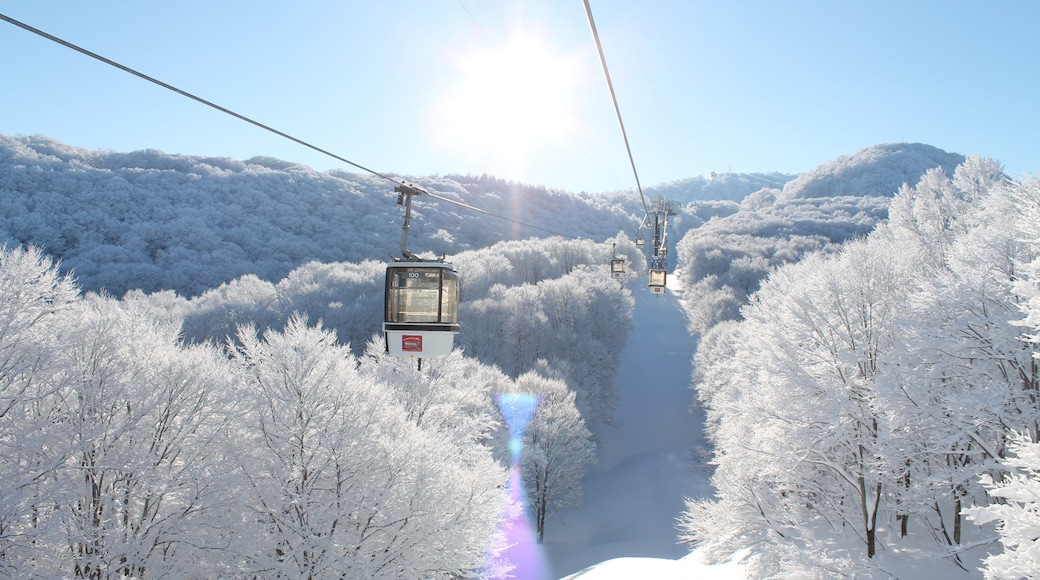 Nozawa Onsen Snow Resort which includes a gondola and snow