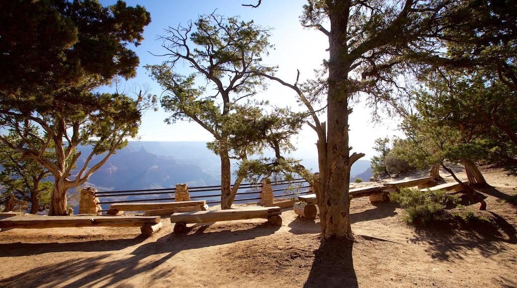 大峽谷 呈现出 峽谷 和 景觀