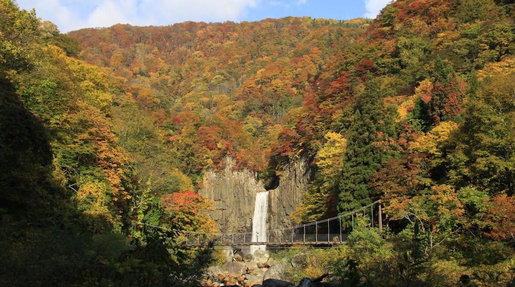 Myoko แสดง ใบไม้เปลี่ยนสี, ป่า และ น้ำตก