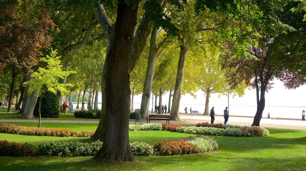 Balatonfüred welches beinhaltet Garten, allgemeine Küstenansicht und Blumen
