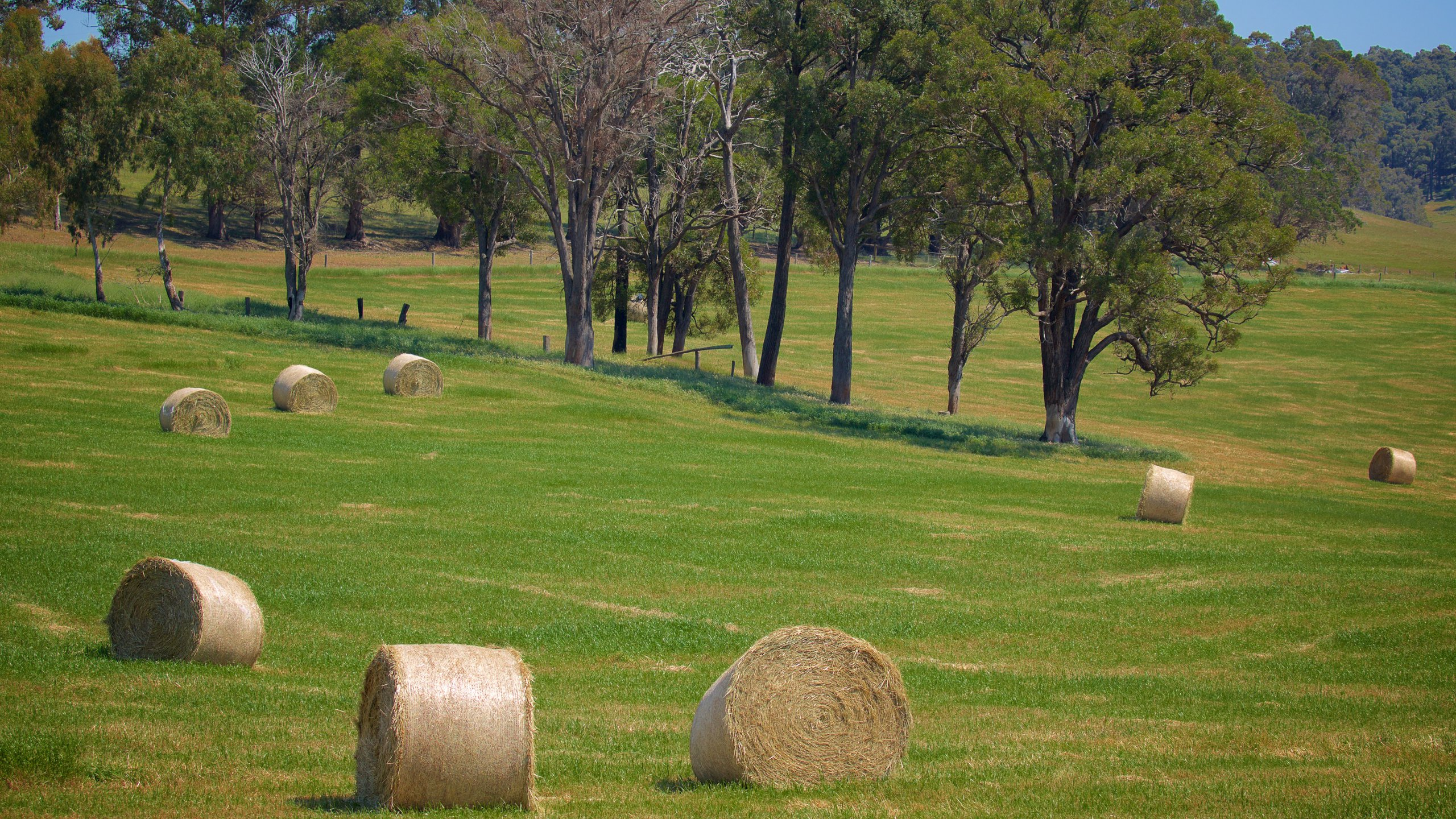 Dardanup Shire, Western Australia, Australien