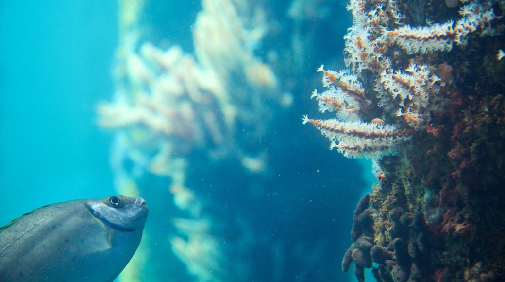 Busselton Jetty Underwater Observatory featuring marine life