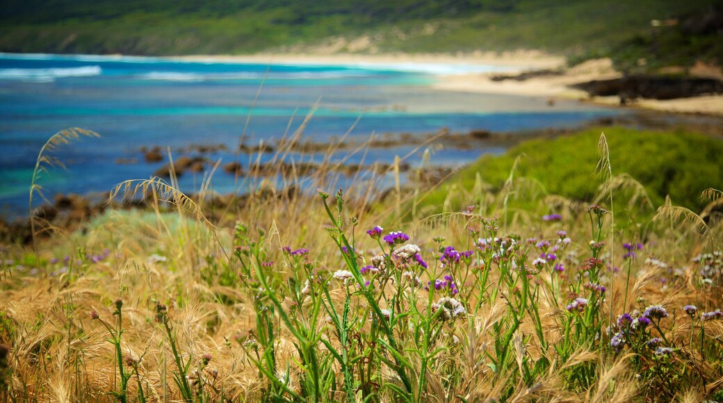 Yallingup mettant en vedette plage de sable et fleurs sauvages