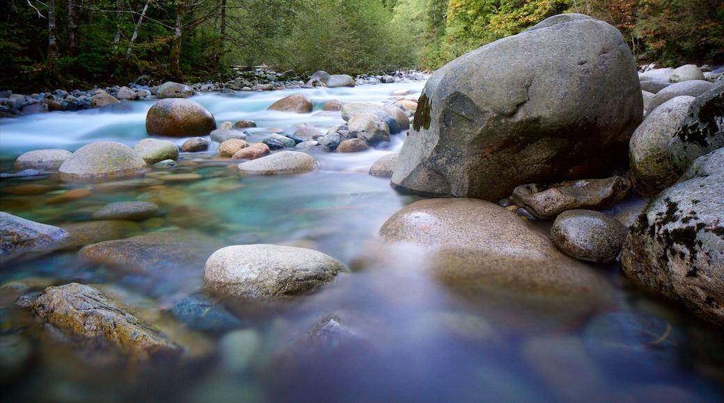 Lynn Canyon Park featuring rapids