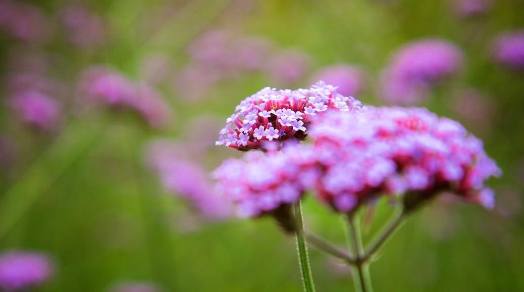 Jardín botánico VanDusen que incluye flores
