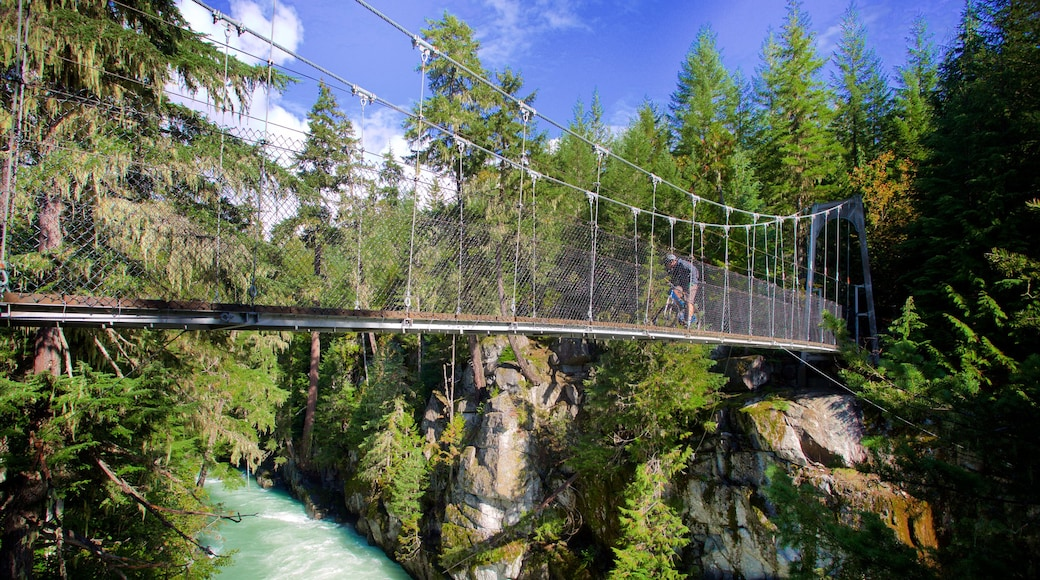 Garibaldi Provincial Park featuring forest scenes, a suspension bridge or treetop walkway and mountain biking