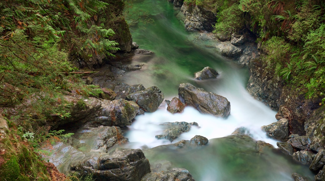 Lynn Canyon Park showing forest scenes and a river or creek