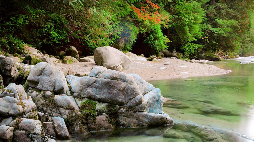 Lynn Canyon Park featuring a river or creek and forests
