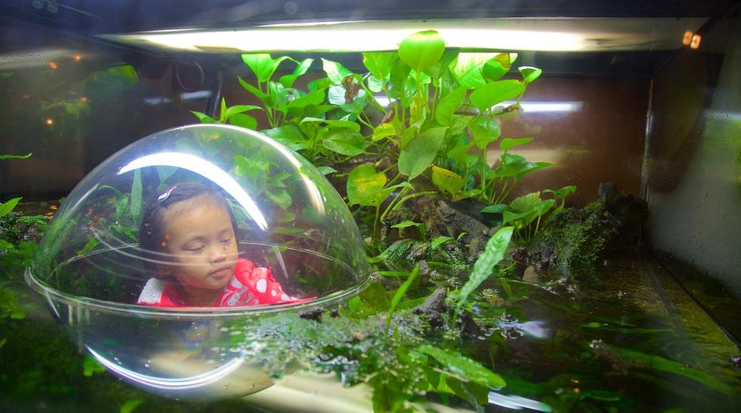 พิพิธภัณฑ์สัตว์น้ำแวนคูเวอร์ ซึ่งรวมถึง ชีวิตทางทะเล, บ่อน้ำ และ สัตว์