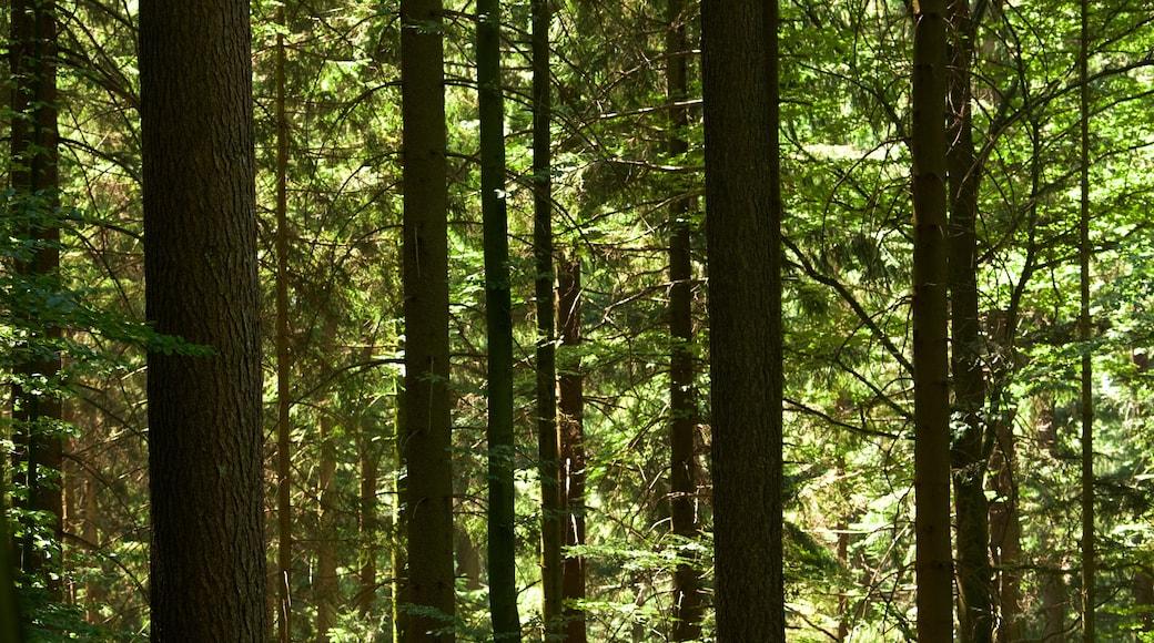 Baden-Württemberg mit einem Wälder