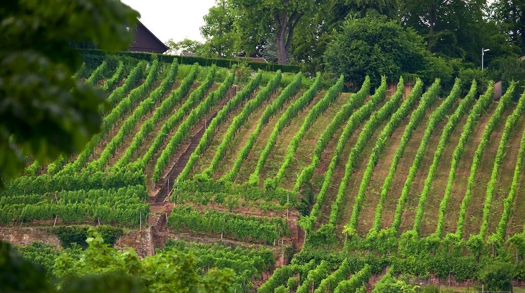 에슬링겐 을 보여주는 농장 과 한적한 풍경