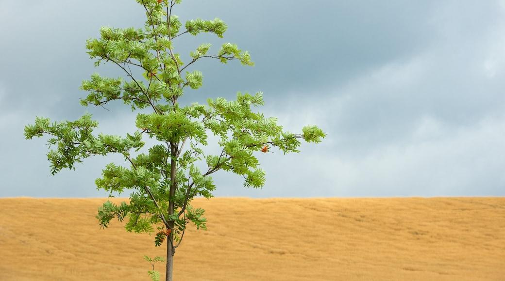 薩克森小瑞士國家森林公園 呈现出 沙漠風景