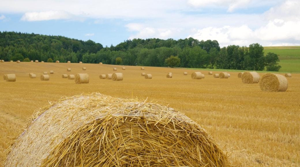 Sajonia mostrando tierra de cultivo