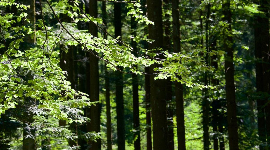 Schwarzwald mit einem Wälder