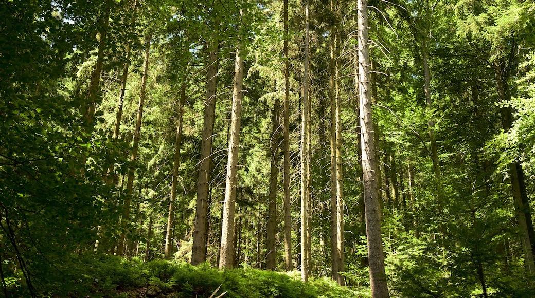 Schwarzwald das einen Wälder