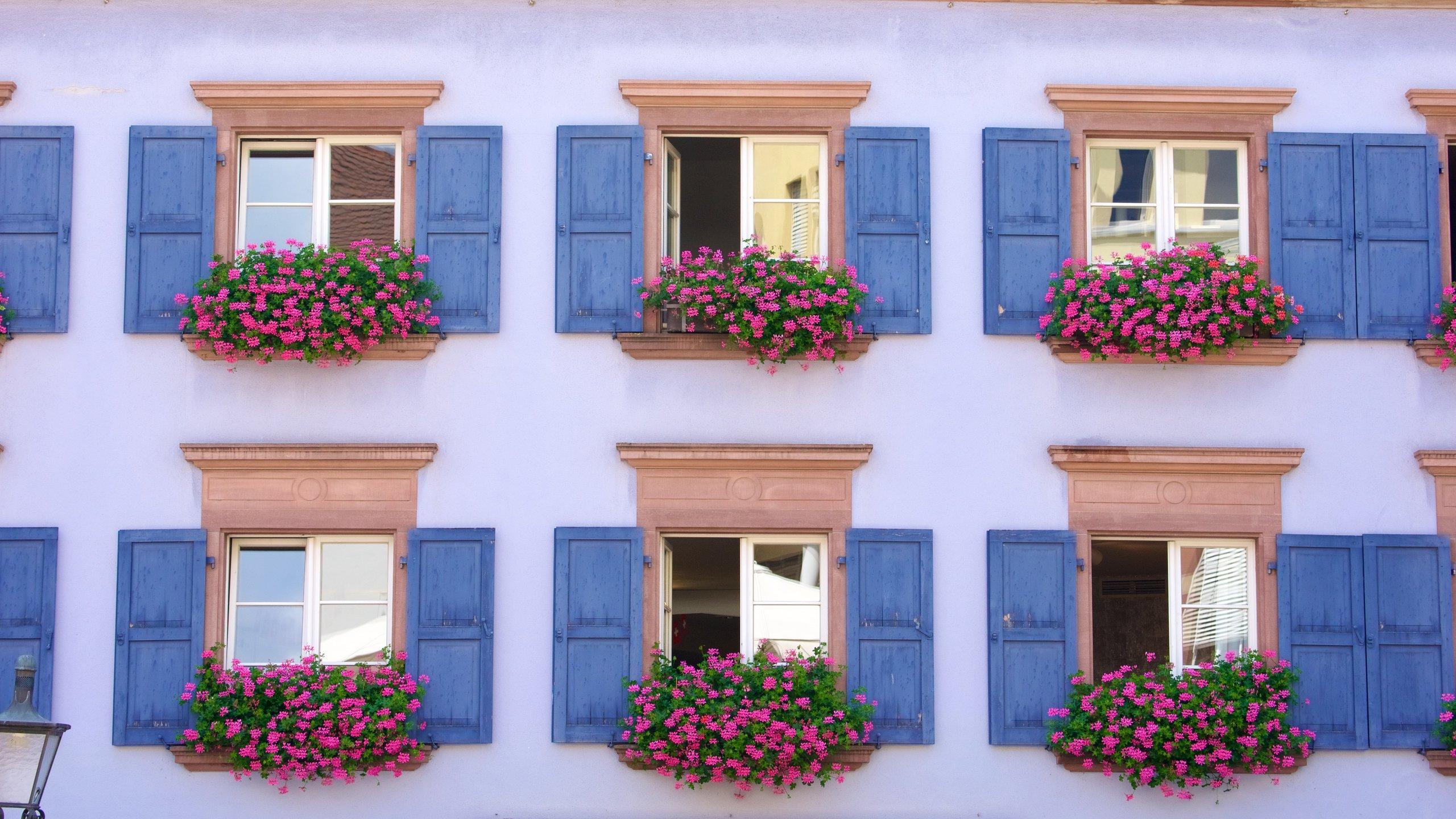 Mitte, Freiburg im Breisgau, Baden-Württemberg, Germany