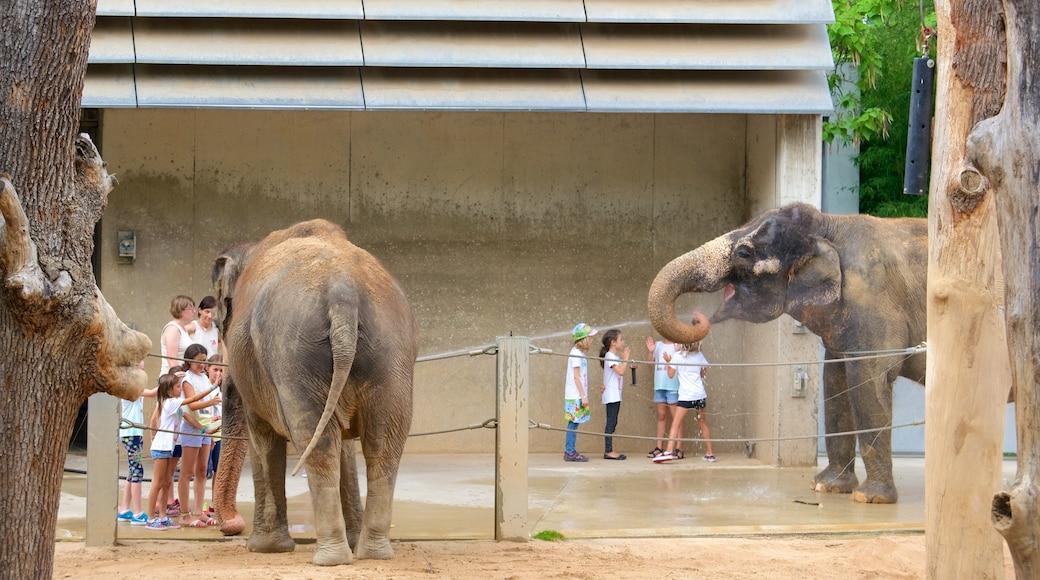 Zoo Stuttgart das einen Landtiere und Zootiere sowie große Menschengruppe