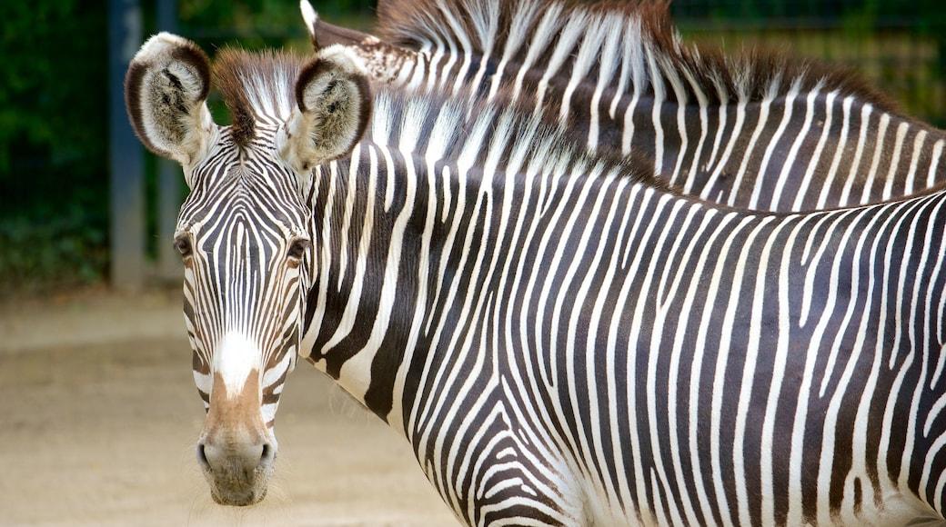 Zoo Stuttgart das einen Zootiere und Landtiere