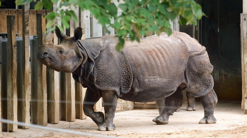 Zoo Stuttgart mit einem Zootiere und Landtiere