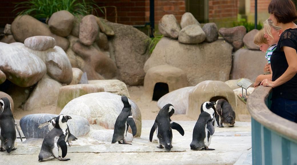 Zoo Stuttgart welches beinhaltet Zootiere, Ansichten und Vögel