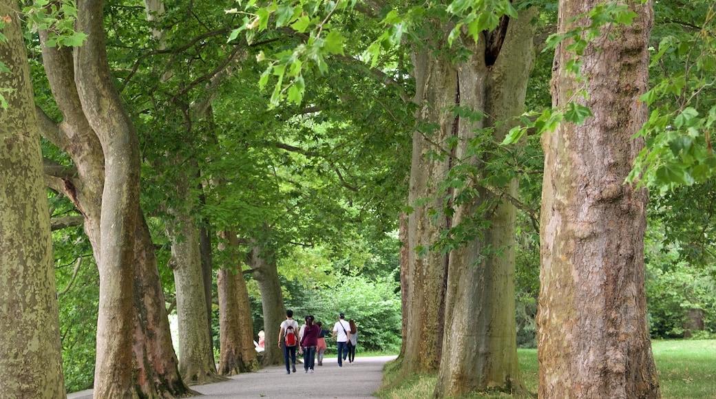 Insel Mainau mit einem Park