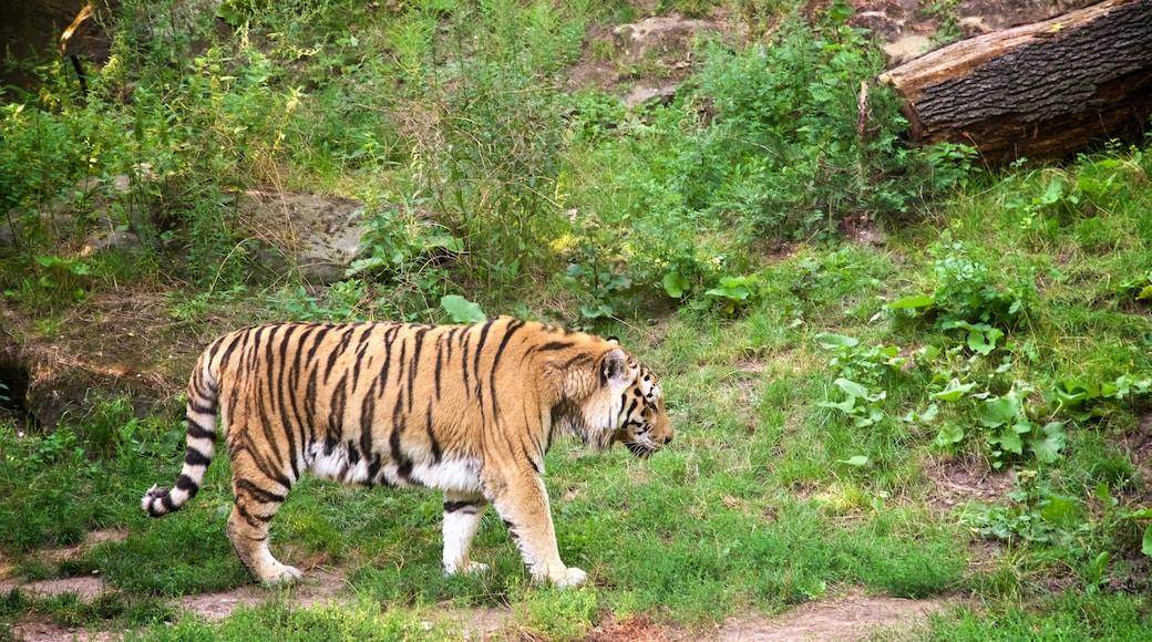 Zoo Leipzig mit einem Zootiere und gefährliche Tiere