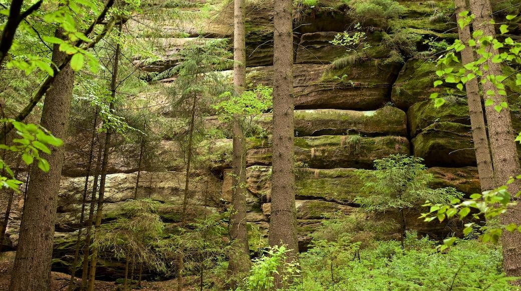 薩克森小瑞士國家森林公園 呈现出 森林風景