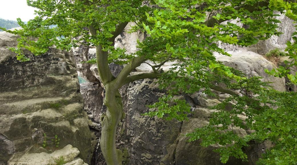 薩克森小瑞士國家森林公園 呈现出 峽谷