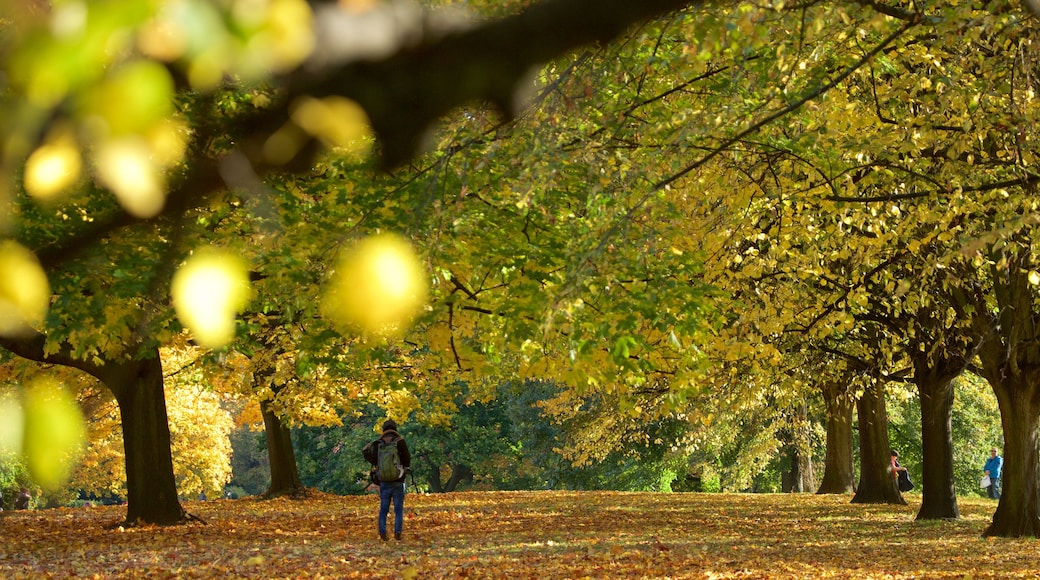 Kensington Gardens which includes autumn leaves and a park as well as an individual male
