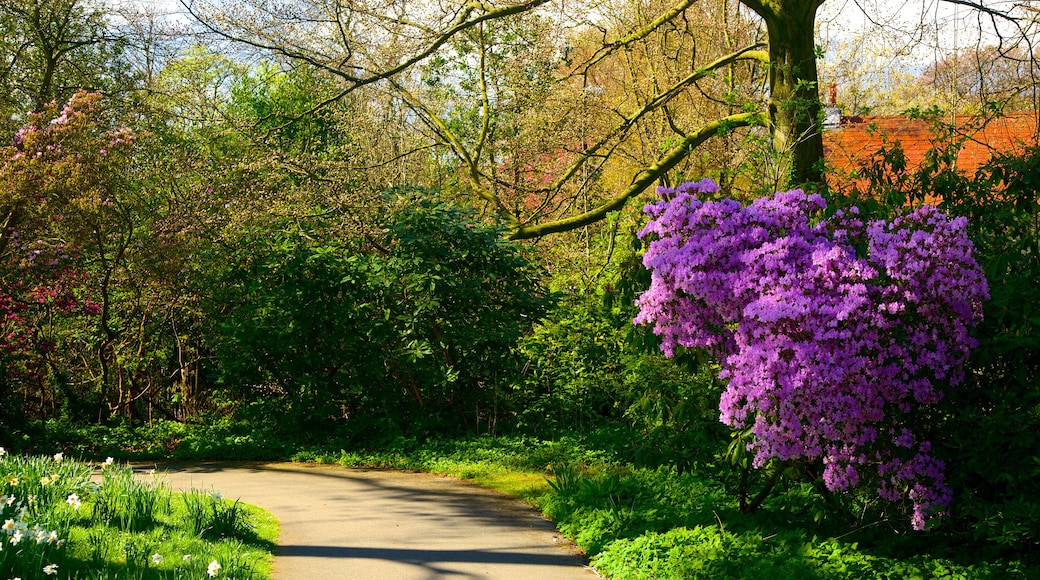 Roundhay Park which includes a park and flowers