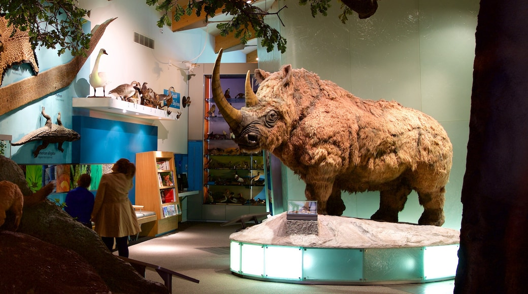 Weston Park Museum showing interior views