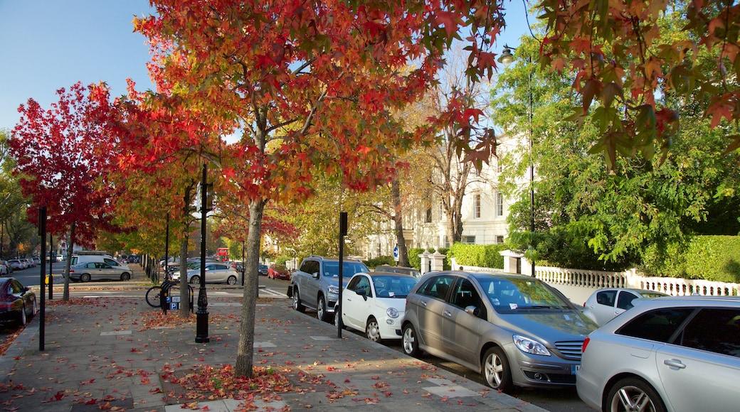 Paddington bevat straten en herfstbladeren