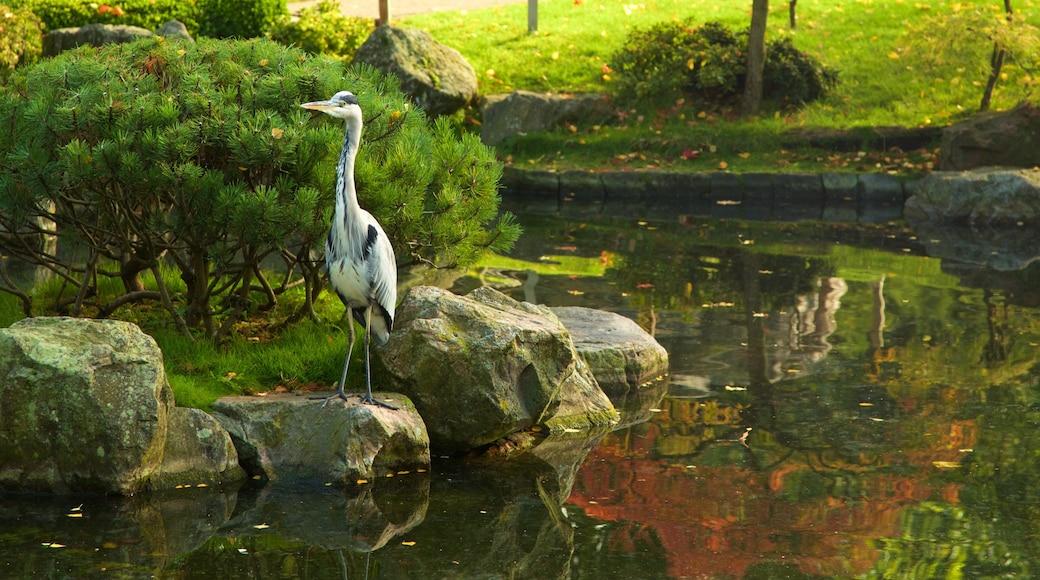 Holland Park caracterizando um jardim, vida das aves e um lago