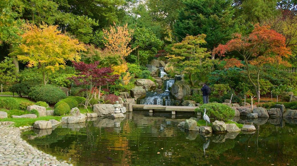 Holland Park mostrando uma cachoeira, um jardim e um lago